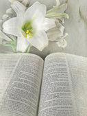 Holy Bible with Easter lily — Stock Photo