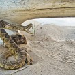 Rattle snake in sand — Stock Photo #11300507