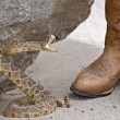Rattle snake with boots — Stock Photo