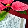 Christmas Bible with poinsettia - Stockfoto