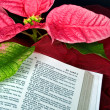 Christmas Bible with poinsettia - Photo