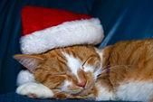 Weihnachten-tabby-katze — Stockfoto