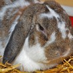 Floppy eared bunny — Stock Photo #11377688