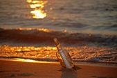 Solnedgång flaska — Stockfoto