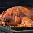 Pig Roast — Stock Photo