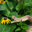 Rattle snake in garden — Stock Photo