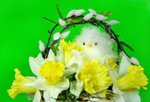 Spring Chicken — Stock Photo