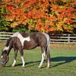 Horse in autumn pasture - Stock Photo