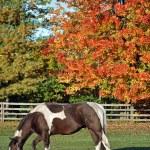 Paint horse in autumn pasture — Stock Photo #11440311