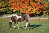 Horse in autumn pasture — Stock Photo