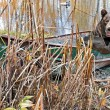 Bear in rusty row boat — Stock fotografie