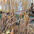 Bear in rusty row boat — Stockfoto