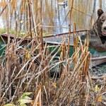 Bear in rusty row boat — Stock Photo
