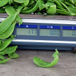 Sugar peas on scale — Stock Photo