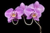 Orchidea i perły — Zdjęcie stockowe