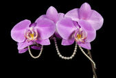 Orchidej a perly — Stock fotografie