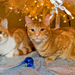 Tabby cats under Christmas tree — 图库照片