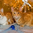 Tabby cats under Christmas tree — Stock Photo #11501319