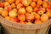 Apricots in bushel basket — Stock Photo