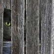 Stock Photo: Cat peeking through barn hole