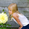 Little girl with big dahlia — Stock Photo