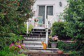 Cat on porch steps — Stock Photo