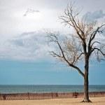 Beech tree on beach — Stock Photo #11557321