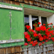 Red geraniums in window box - Stockfoto