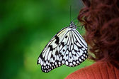 Butterfly on woman's hair — Stock Photo