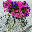 Foto Stock: Vintage tricycle with petunias