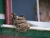 Child watching a bird on a nest — Stock Photo