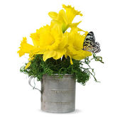 Butterfly on daffodil bouquet — Stock Photo