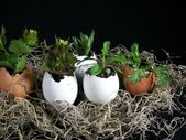 Plants growing in eggs — Stock Photo