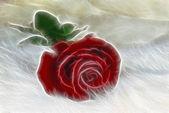 Fractal rose on fur — Stock Photo