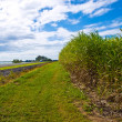 Sugar cane used for ethanol biofuel in Australia — Stock Photo