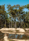 Typical Australian gum trees contryside landscape — Stock Photo