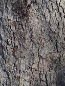 Grey bark texture — Stock Photo
