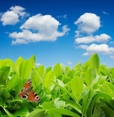 Green leaves with butterfly and blue sky with clouds — Stok fotoğraf