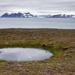 Water Pool on the Seashore of Svalbard — Stock Photo