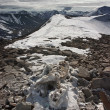 Stock Photo: Frozen Skeleton of a Dead Reindeer in Arctic Mountains