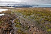 Nat oppervlak op spitsbergen — Stockfoto