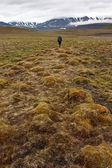 Person Walking in Tundra on Svalbard — Foto Stock