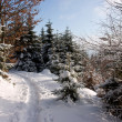 Winter Forest Footpath - Stock Photo