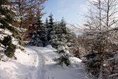 Winter Forest Footpath — Stock Photo