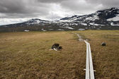 Kungsleden footpath — Stock Photo