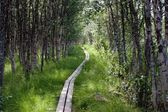 Kungsleden footpath with Wooden Planks — Stock Photo