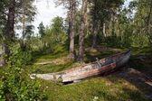 Velho barco de madeira na floresta — Foto Stock