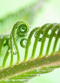 Eğri üzerinde bitki — Stok fotoğraf