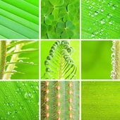 Green set — Stock Photo
