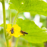 včela a květinové — Stock fotografie